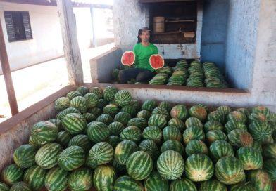 Agricultor do Assentamento Córrego Rico tem bons faturamentos cultivando melancia