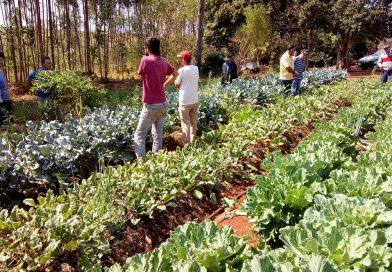 Nova etapa do curso de alimentos orgânicos em assentamentos de Araraquara