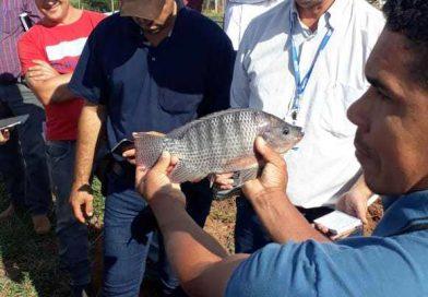 Dia de Campo em Euclides da Cunha celebra o cultivo de peixes